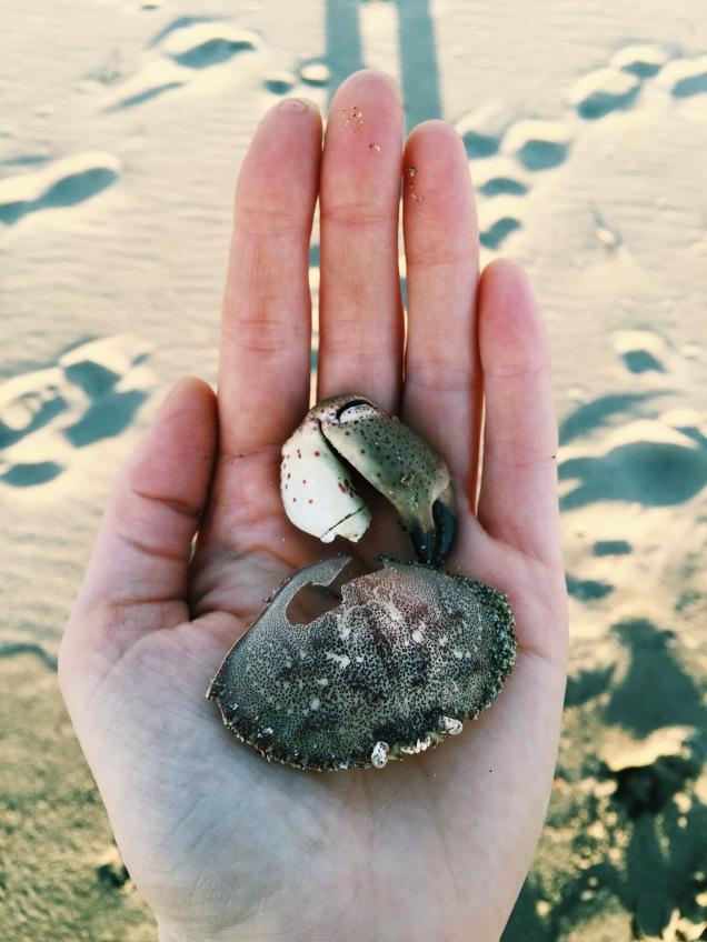 Point Reyes shells