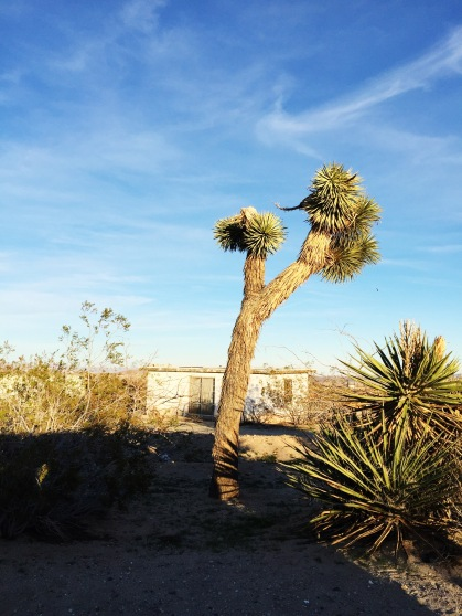 Joshua Tree and shack