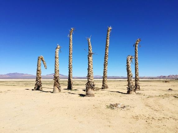 Joshua Tree dead palms